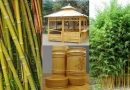 ბამბუკის პლანტაციის (Phyllostachys) გაშენება და მოვლა