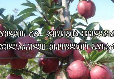 ვაშლის მოდა. რომელი ვაშლისჯიშებს ანიჭებენ უპირატესობას მოწინავე მსოფლიო მწარმოებლები?