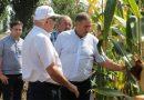 ფერმერებს სიმინდის ქართული პერსპექტიული ჯიშები გააცნეს
