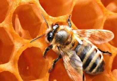 მეფუტკრეობაში რეგისტრირებული ვეტერინარული პრეპარატების ნუსხა, მეფუტკრე ფერმერთა და თაფლის მწარმოებელთა ვალდებულება