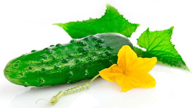 cucumber лщдщдлдлфолок 455999