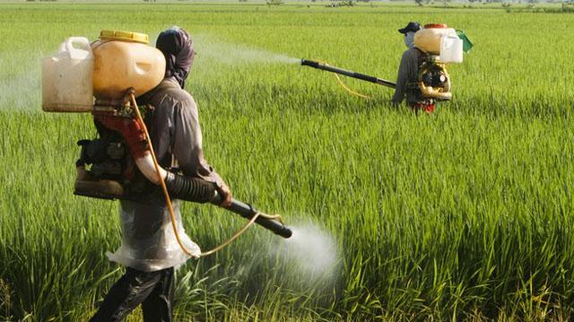 pesticidebi pesticiedebalajldkfjas