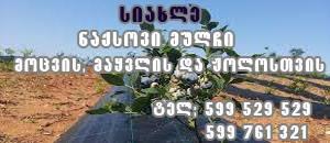 naqsovi_mulch_231168945757316f