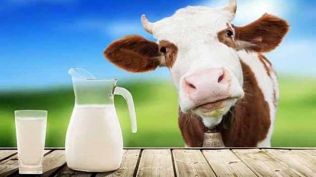 რძე კლაკდჯფლაჯსდლფჯასდ