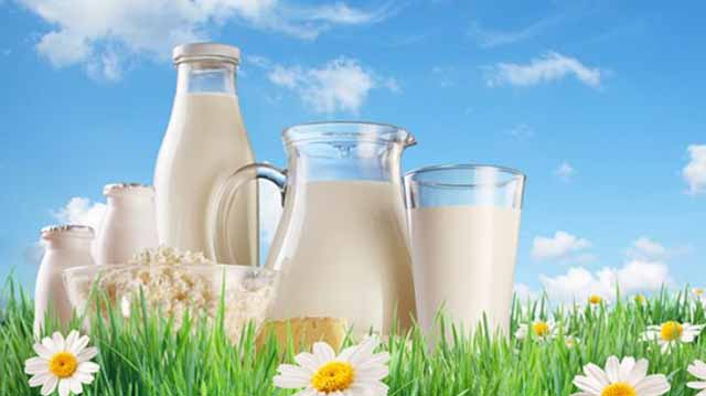 რძე მწარე რძე ლკაჯლდკფჯაფფასდფ