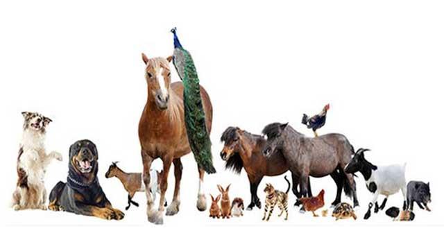 ცხოველების შვილები და მ ათი შთამოვალობა