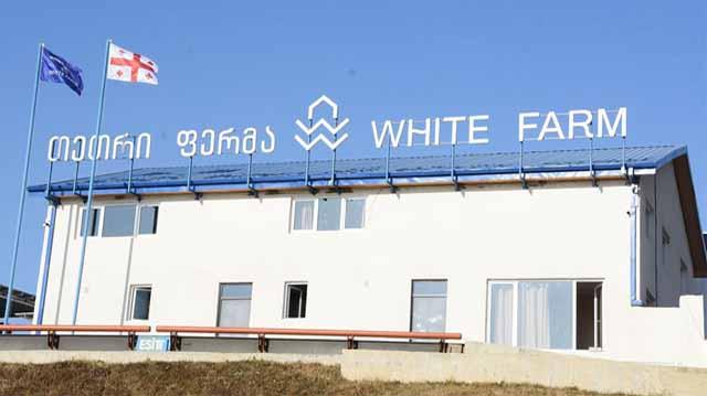თეთრი ფერმა