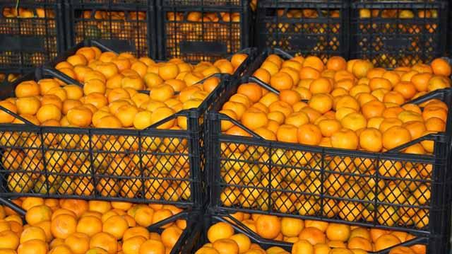 citrusi citurilkajsldkfjlasdjflasdjfl;asdjflasjdflksjadfl;kjasd