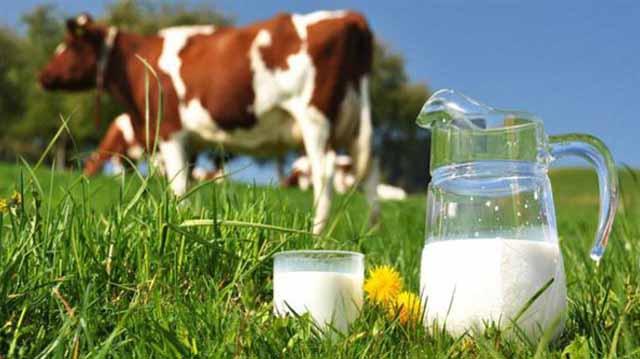 ძროხა რძე და სტატისტიკა