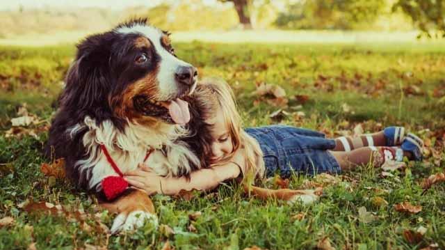 ძაღლი ძაღლთაპირი