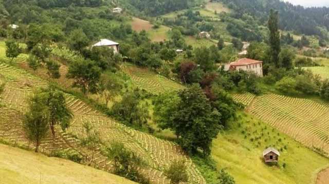 სოფელი სოფლეეეეელკჯსდლკფჯალკფჯ