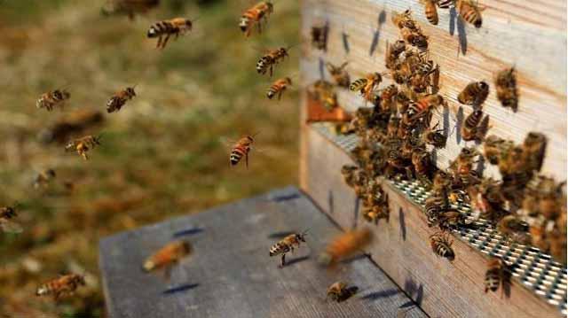 ფუტკრის ოჯახი