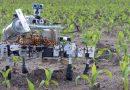 """ხელოვნური ინტელექტით აღჭურვილი """"რობოტები ფერმერები"""" სულ უფრო რთულ სამუშაოს ასრულებენ"""
