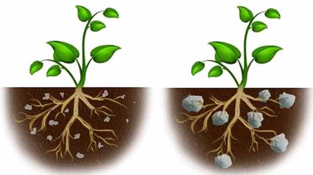 მცენარეთა კანონი კანონიიკლასდჯკფასდ