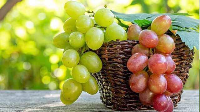 სუფრი ყურძენი ყურძენილკაჯდლკფჯასდ