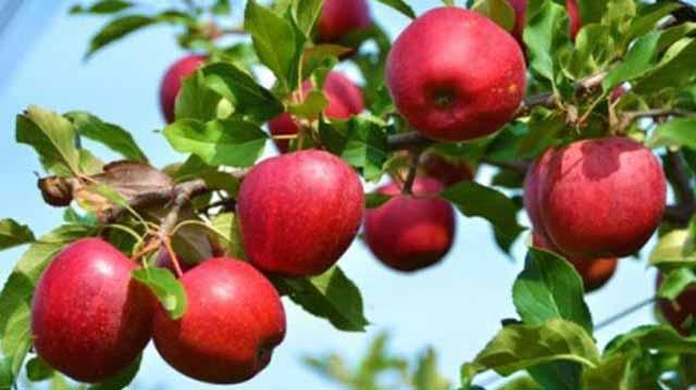 ვაშლი ვაშლი 99900000-09=80079986