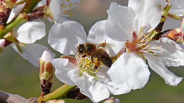 ბაღი და ფუტკარი ბაღი და ფუტკარი