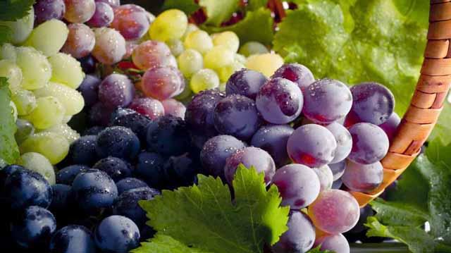 სუფრის ყურძენი ლჯალკდჯფკლასდჯფლკჯასდფ